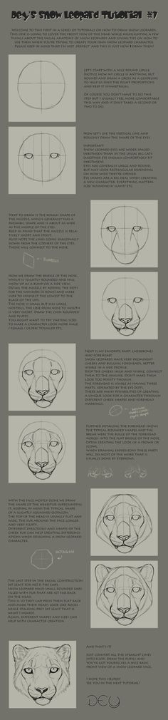 Tutorial: Snow Leopard Head #1 by DeyVarah.deviantart.com on @deviantART