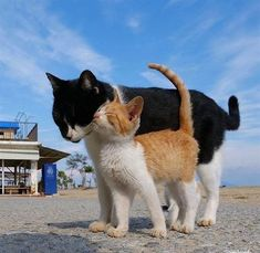 Cute Little Animals, Cute Funny Animals, Cute Cats, Baby Cats, Cats And Kittens, Cat Aesthetic, Tier Fotos, Warrior Cats, Cute Creatures
