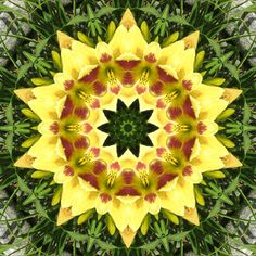 Fab Fabrications--Kaleidoscopes from Nature Images Emphasizing Geometry In Nature and Symmetry: Yellow Daylily in our Garden