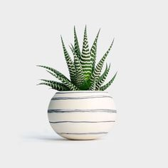 Wapa Mini Planter with Haworthia succulent  -Low Maintenance Plant -Local NYC delivery and Nationwide shipping