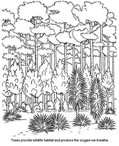 pictures of rainforest trees to color - Yahoo Image Search Results Forest Coloring Pages, Tree Coloring Page, Online Coloring Pages, Cute Coloring Pages, Leaf Coloring, Animal Coloring Pages, Coloring Pages For Kids, Coloring Books, Tree Drawing Wallpaper