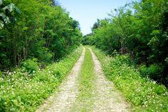 異界「ニライカナイ」に繋がる沖縄の最も聖なる地、久高島