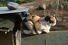 Multicolor - Multicolor cat sunbathing - Vighizzolo, Como, Italy. Como Italy, Cats, Animals, Gatos, Animales, Animaux, Animal, Cat, Animais