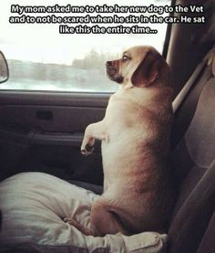 Maybe he thought if he passed as human they wouldn't take him to the vet!    :-)