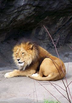For more in depth info on Leo personality and traits go to http://www.examiner.com/article/the-leo-sign-leo-traits-personality-and-characteristics