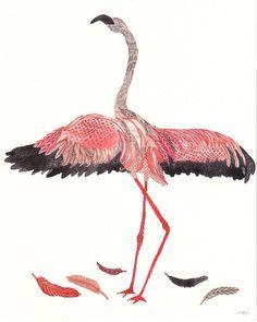 195 best flamingo drawings