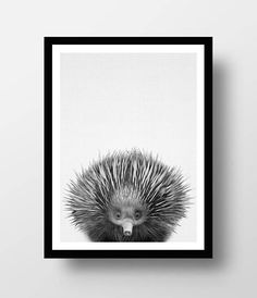 Echidna Print, Australian Animal Print, Australian Animal Wall Art, Nursery Printable, Nursery Aninals, Nursery Decor, Nursery Print  PLEASE NOTE, THIS IS A DIGITAL DOWNLOAD ONLY. No physical product will be shipped and the frame is not included.  Each JPG is high-resolution (300 dots