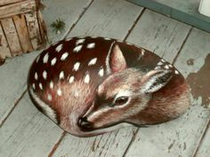 Fawn on a rock