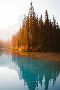 Time spent amongst trees is never wasted time Yoho National park, Canada. Landscape Art, Landscape Photography, Nature Photography, Cool Pictures, Cool Photos, Beautiful Pictures, Beautiful World, Beautiful Places, Yoho National Park