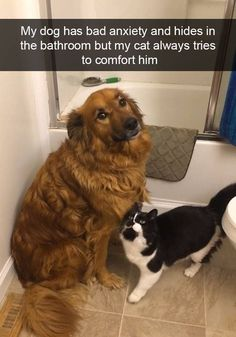 My dog has bad anxiety and hides in the bathroom but my cat always tries to comfort him