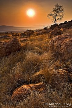 Golden Mountain Sunset - Magaliesburg, South Africa by Mitchell Krog on Art Prints For Home, Wall Art Prints, Bandeau Led, Mountain Sunset, Winter Sunset, Country Landscaping, Landscaping Rocks, Out Of Africa, Beautiful Sites