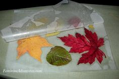 Dry leaves in microwave, then iron between pieces of wax paper.
