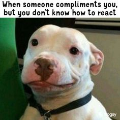 The awkward smile after a compliment When Someone, Awkward, Pitbulls, Memes, Dogs, Animals, Smile, Compliments, Funny Pics