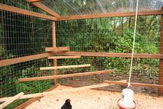 outdoor perch for chickens - Google Search