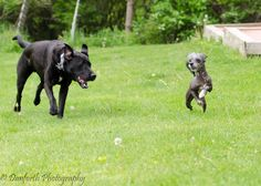 Before you take your dog for a jog, keep in mind that not every dog is born to run! Here's some good info...