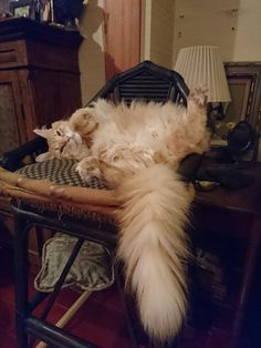 My kitty cat Mac☆85  I am so relaxed〜(What a way for sleeping!  Hide it, Mac!)