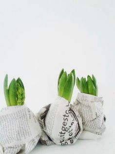 Wrap your bulbs in news paper while you preserve them before planting or giving it as a gift. The newsprint adds a bit of style to the bulbs. You can even tie a sting of twine around the neck to secure the paper and add to the gift wrapping.