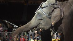 Petition · Shriners International: Don't Be Cruel to Be Kind! End the Use of Wild Animals in your Circuses! · Change.org