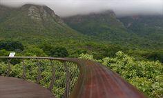 Kirstenbosch National Botanical Garden #kirstenbosch #botanicalgardens #photography #capetown #southafrica