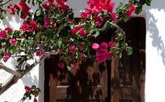 Samos Greece, Studio Apartment, Aphrodite, Photo Galleries, Floral Wreath, Christmas Tree, Rooms, Landscape, Holiday Decor