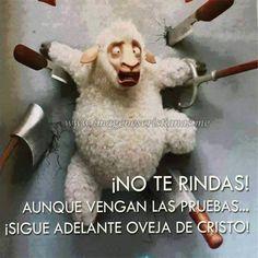 Imagenes Cristianas No Te Rindas