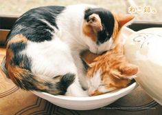 cat stew for those cold winter days, add more cats as necessary
