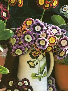 Auricula's are one of my most favourite flowers by Romany Soup, via Flickr