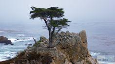 - Check more at https://www.miles-around.de/nordamerika/usa/kalifornien/highway-no-1-von-san-francisco-nach-marina/,  #17-Miles-Drive #Carmel #HighwayNo.1 #Hotel #Kalifornien #Nationalpark #Natur #Pazifik #Reisebericht #SanFrancisco #USA