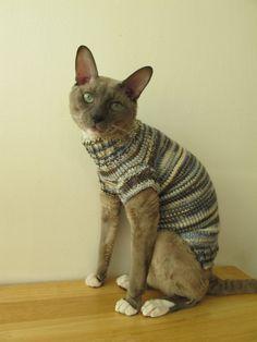 {the cat's wool jumper}