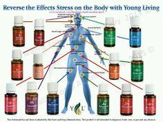 young living essential oils - longevity | Young Living Essential Oils | HEALTHY LIVING