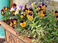 buon pomeriggio oggi è proprio giornata di giardinaggio con questo splendido sole! Ecco per voi i lavori del mese per l'orto e il giardino