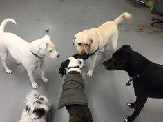 #playtime #dogsitting #doggydaycare #dingosdogsitting #dogs