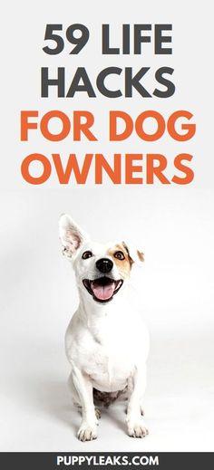 Golden Retriever, Labrador Retriever, Labrador Puppies, Boxer Dogs, Cleaning Hacks Tips And Tricks, Lifehacks, Vie Simple, Old Sweatshirt, Pekinese