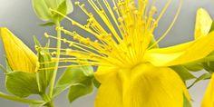 Neurodermitis | Das ist die beste Salbe gegen Juckreiz | Praxisvita