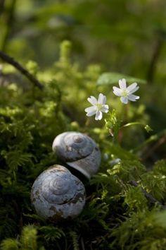 A floresta com suas belezas e encantos