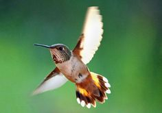 MORNING FLIGHT Photo by Rory Sagner — National Geographic Your Shot