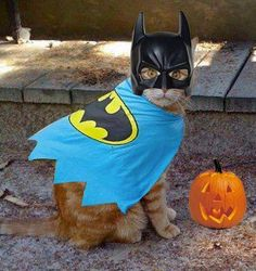 "Bat Cat says, ""Happy Halloween"""