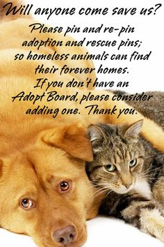 Please, if we won't help the homeless and abused who will?  Won't you consider adding an Adopt Board, and pin the animals in need?  Thank you.