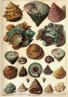 A collection of shells