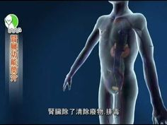 認識腎臟-首部3D國語衛教短片