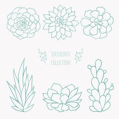 Succulents Drawing, Watercolor Succulents, Planting Succulents, Succulent Plants, Cactus Plants, Succulents Painting, Succulents Art, Art And Illustration, Plant Drawing