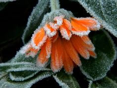 Orange frozen by AnaPana. @go4fotos