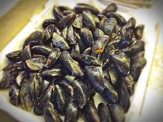English mussels from the Isle of Wight. Saw these delightful mussels at the Coventry farmers market. by mickeyncube - Photo 129751849 - 500px