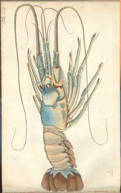 https://flic.kr/p/apV1Ym | Versuch einer Naturgeschichte der Krabben und Krebse g | See: bibliodyssey.blogspot.com/2011/09/crustacean-atlas.html