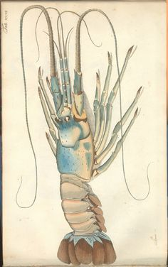 bibliodyssey.blogspot.com/2011/09/crustacean-atlas.html
