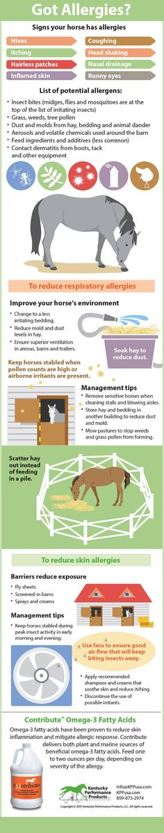 Infographic: How to reduce your horses allergies. Horse Information, Horse Care Tips, Horse Anatomy, Horse Facts, Horse Camp, Horse Training Tips, Horse Love, Beautiful Horses, Equestrian