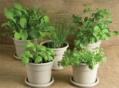 Vasinhos de ervas podem ser usados na decoração da sua cozinha.