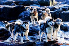 Photos of purebred dogs