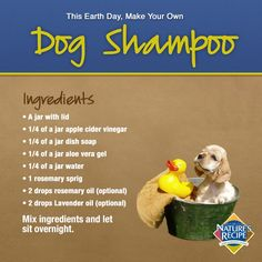 Homemade Dog Shampoo I would use Baby Dr Bronners in place of Dish Soap