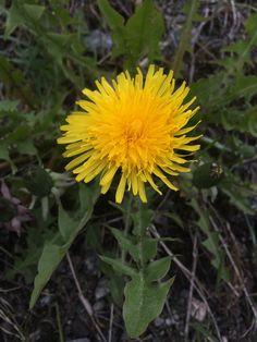 Celebration of spring. by Kaia Huus - Photo 152423725 - Celebration, Spring, Plants, Flora, Plant, Planting